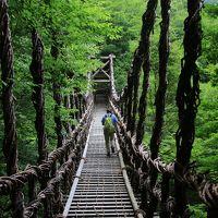 初めての四国旅行はピンポイント (2) 野趣あふれる奥祖谷の二重かずら橋