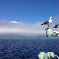 予想外なことばかり7月の利尻・礼文島ツアー