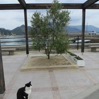 大人になってもクラブ合宿ーDay2 八日目の蝉の舞台 小豆島へ