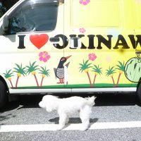 沖縄 2014 with 🐕