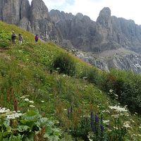 世界遺産ドロミテとアルプス展望ルート10日間の旅�カルデーナ峠で見られた高山植物