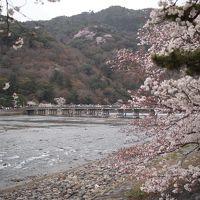 春の京都ひとり旅【7】二日目・桜咲く嵐山、天龍寺、引源寺、宝厳院、渡月橋と二条城の夜桜