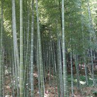 天龍寺の庭園を散策。植物園のように説明表示がたくさん。親切なお寺です。