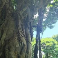 4トラさんのポイントで沖縄二泊三日旅行!!(1日目)