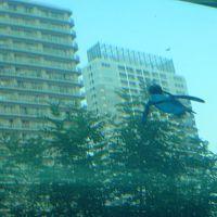 リニューアルしたサンシャイン水族館&ズーラシアetc