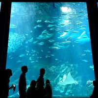 連休のヒルトン福岡シーホーク〜フェリーうみなかラインで行くマリンワールド海の中道水族館 その2