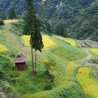 十日町市、棚田巡りとアートの旅 帰りは、越乃Shu*Kuraで呑みまくり