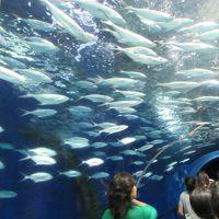 上海定期便〜水族館に行ってみた