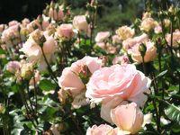 ブエノスアイレスのバラ園 El Rosedal de Palermo へ