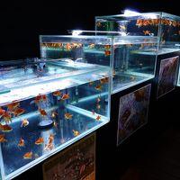 時の栖美術館 金魚アクアリウム 初見