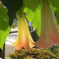 夏と秋が同居した花が見られたふじみ野市鶴ケ岡中央通り傍の花園
