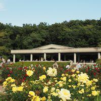 深大寺の白鳳仏(国宝)と神代植物公園の秋バラ