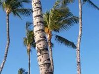JAL直行便でハワイ島へパワーもらいに
