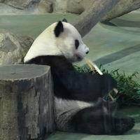 連休の台湾は、蒸し暑かったわん二日目、十分と動物園