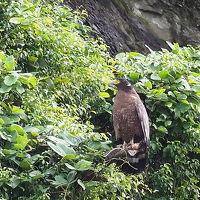 酉年・後半 台北で探鳥三昧シニアの旅� 10月11日
