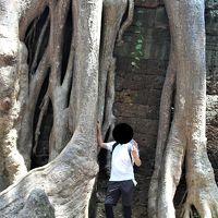 悠久の歴史〜インドシナの遺跡・世界遺産を訪ねる旅 その� 6日目その4:神秘的空間タ・プロームへ、自然が文明を征服する凄まじさ!