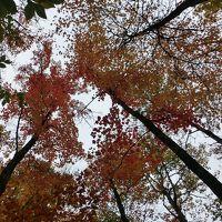 メープル街道の紅葉とナイアガラの滝 アルゴンキン州立公園編