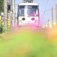 「幸福の招き猫電車」を追いかけて東急世田谷線に訪れてみた