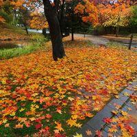 紅葉満喫 北海道旅行