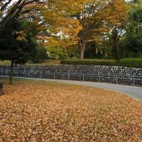 フルーツの丘の紅葉がいい感じ(11月1日・4-1)