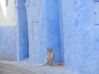 モロッコの青い街 シャウエンぶらり旅