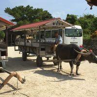 娘と孫を連れて台風後の石垣島へ。泊りはグランヴィリオガーデン【2日目】