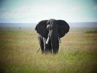 小学生旅行日記 家族で行くザンジバル島・ンゴロンゴロ・セレンゲティ国立公園!その1