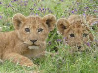 小学生旅行日記 家族で行くザンジバル島・ンゴロンゴロ・セレンゲティ国立公園!その2
