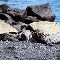 大自然を満喫!JALパックで行くハワイ島一人旅3*・゜・*(南回り)一人海外ドライブのススメ*・゜・*