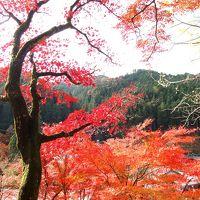 静かな静かな里の秋〜