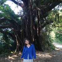 11月のあったか沖縄へ友人を訪ねに行きました�島南部の地元民おすすめグルメと不思議なことが起こった久高島へ