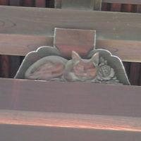 四天王寺の眠り猫