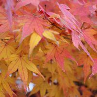 七ノ一 秋の京都〜紅葉とアートアクアリウム