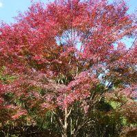紅葉の神戸市立森林植物園