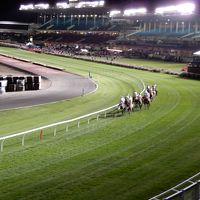 2017年 オーストラリア・メルボルンで競馬漬けの旅� ムーニーヴァレー競馬場2