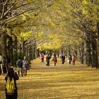 昭和記念公園 黄葉、紅葉まつり