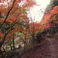 紅葉の愛知県民の森から登る宇連山♪&紅葉の王滝渓谷♪