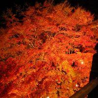 11月17日現在・播州清水寺で紅葉ライトアップ