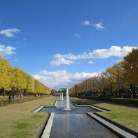 週末散歩 昭和記念公園の紅葉散策