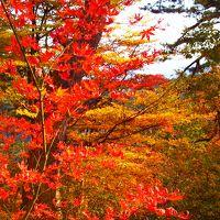 ☆彡東京の山奥へ紅葉狩り☆彡御岳山