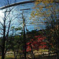 世界文化遺産宗像大社・神宿る島を望む筑前大島と九年庵秋の一般公開2日間、その2:九州国立博物館