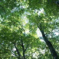 夏の東北旅行【11】世界遺産白神山地散策