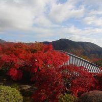 ☆ 秋の箱根 11月紅葉は・・・ ☆ 人気の紅葉スポット 箱根美術館 強羅公園 No1