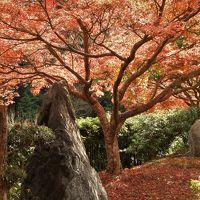 紅葉真っ盛りの三木・金剛寺