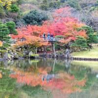 紅葉の彦根と鶏足寺一人旅 (2日目) 彦根城、伝統的建造物群保存地区、多賀大社