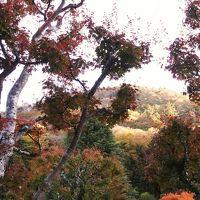 富士屋ホテル ☆ 庭園散歩♪(11月21日)