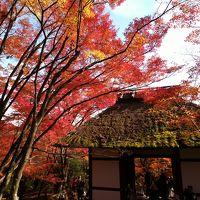 京都の紅葉2018 嵐山〜高台寺