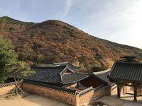 秋の釜山  ☆ 2日間