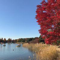 晩秋の昭和記念公園散策