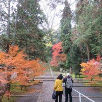 京都の紅葉と着物姿—知恩院、円山公園、花見小路など歩き回るー